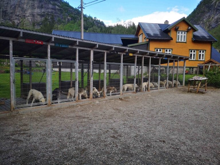 HUSKYVISIT sirdal husky farm norway dogs visit booking