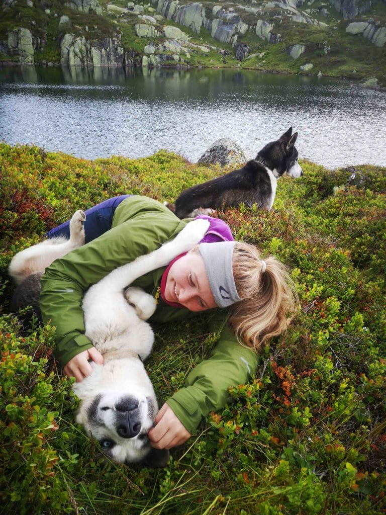Tonstad sirdal husky farm norway sirdal travel hike