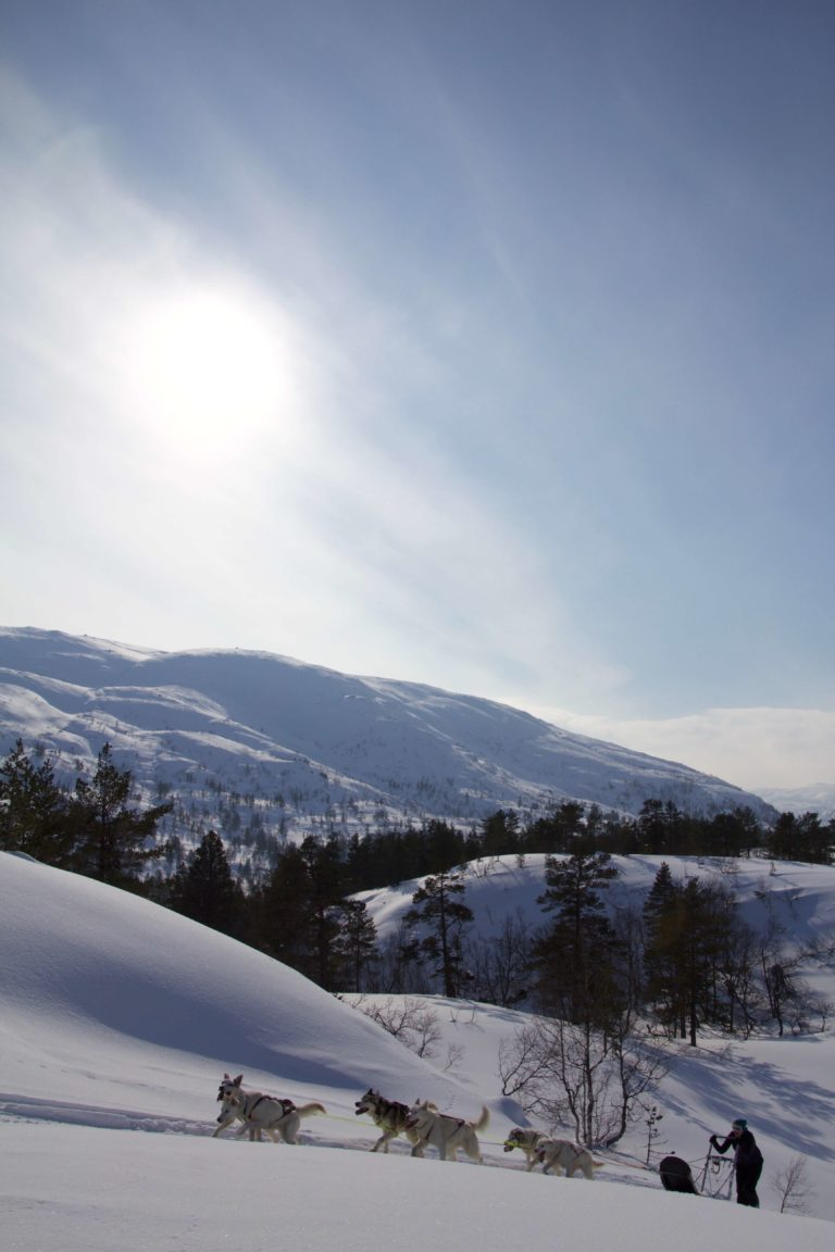 Mountain Adventure sirdal husky farm norway summer winter camp