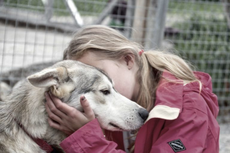 sirdal husky farm camp sirdal outdoor college de summer camp winter camp HUSKYVISIT