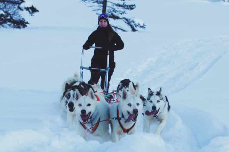 dog sledding adventure sirdal husky farm sleds snow