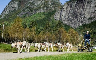 Husky Camp Activity Package sirdal explore norway