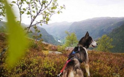 Tonstad sirdal husky farm norway sirdal travel hike GUIDET FJELLTUR